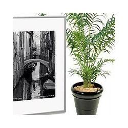 Décorations, tableaux, Plantes